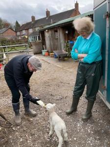 Fr Murray feeding lamb