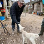 Vicar bottle feeding lamb